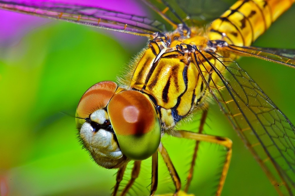 Develop 'Dragonfly Vision'